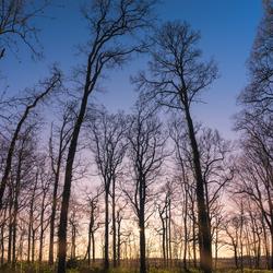 Zonsondergang in Slochterbos