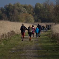 Wandelen in de Oostvaardersplassen