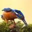 IJsvogel met oogbeschermers