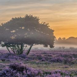 Hilversum Heide