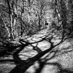Spooky shadow 07