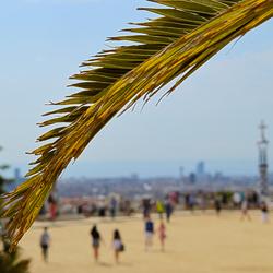 Palmtree Focus