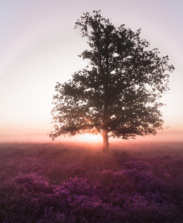 Purple morning - Vroeg op, hopend op grondmist en een prachtige zonsopkomst. Het was het waard!