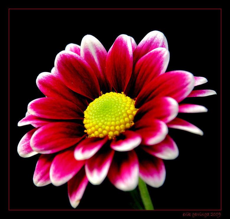 nog een bloemetje -