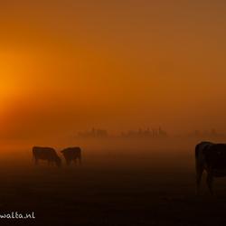 Herfst - Koeien in de mist