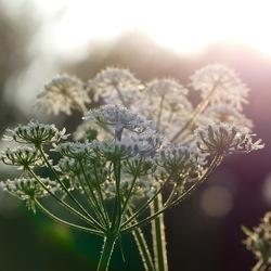 Bloemenschermen in de avondzon