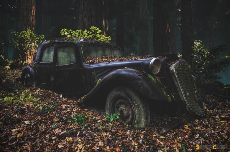 Lost in the Woods - Een autokerkhof in het westen van frankrijk, waar we dit praaltje vonden.
