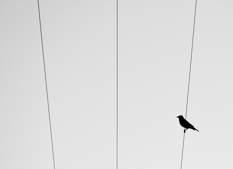 bird on a different wire. -