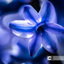 Detail van een hyacint