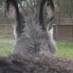Mr. Big-Ears