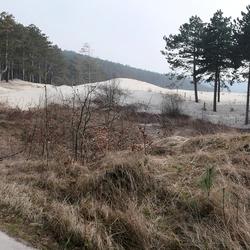 Overstekend Duin panorama Schoorlse Duinen