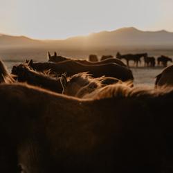 Sunset among horses.