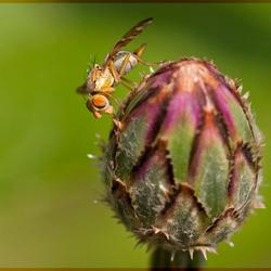 Kleurrijk Minivliegje