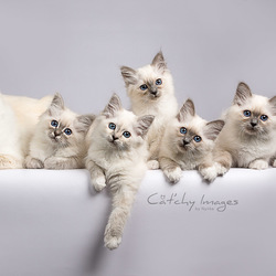 Family Portrait - Mams met kittens