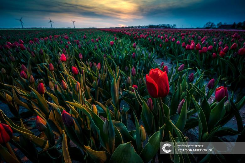Dutch twilight zone - Nog even een throwback naar het voorjaar door een verlate edit. Op het moment dat de onder is gegaan wil ik mijn flitser nog wel