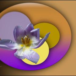 bloemenpalet.............
