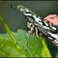 Bewerking: vlinder met ander oog..............