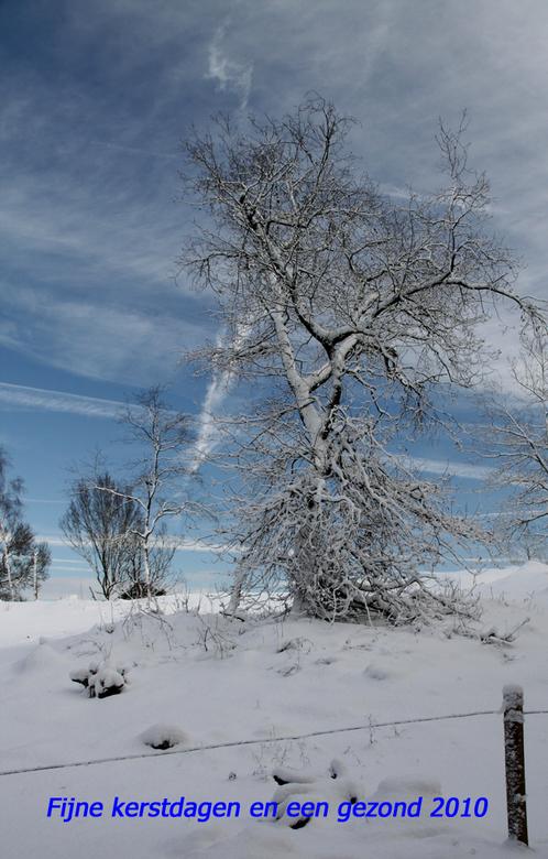 Besneeuwde boom - Nu regen, j.l maandag mooie sneeuw, dus maar 'n plaatje van die dag. Ieder bedankt voor de reactie op mijn vorige upload en vee