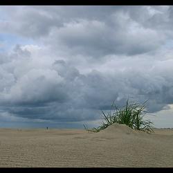 Beginnende duinen