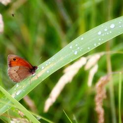 vlindertje in de natuur