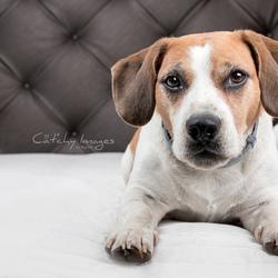 Prada - Beagle