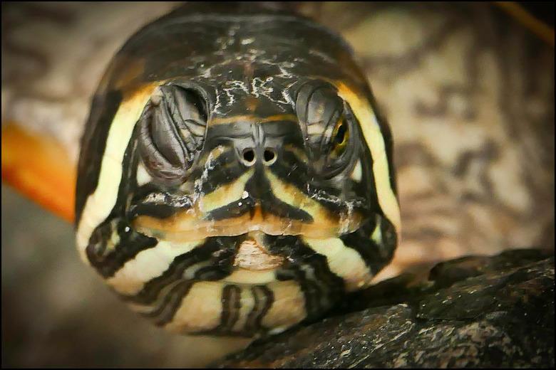wat een halve gare................ - is een schildpad eigenlijk.... vind het rare beesten. Sta ik voor het water waarin ze zwemmen, nauwelijks zichtba