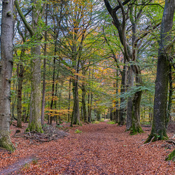 Herfst in het bos bij Beesterzwaag