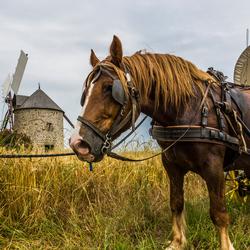 Op reis met paard en wagen.