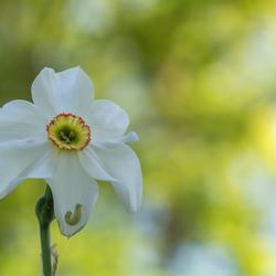 Alleen op de bloem