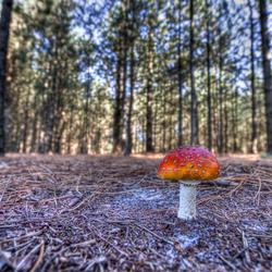 Paddestoel in het bos
