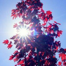 Zie de zon schijnt door de bomen...
