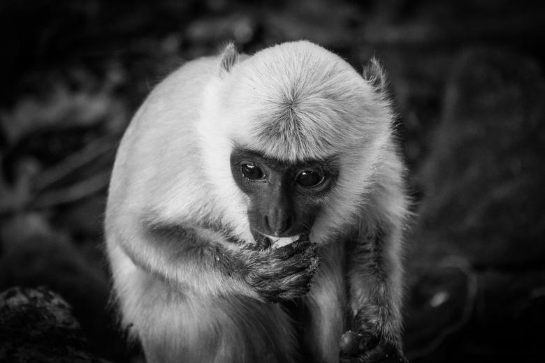 Monkey Mind -