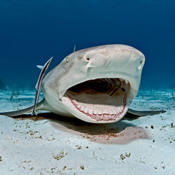 citroen haai