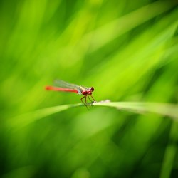 Rood groen