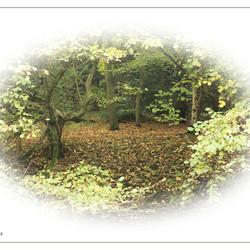Herfst doorkijkje...