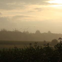 Morgendauw