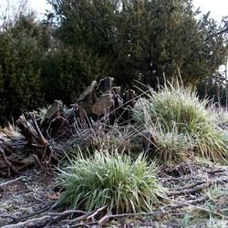 Plant met IJzige lading;)