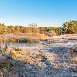 Winter in de Brunssummerheide