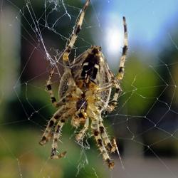 Het is weer spinnentijd
