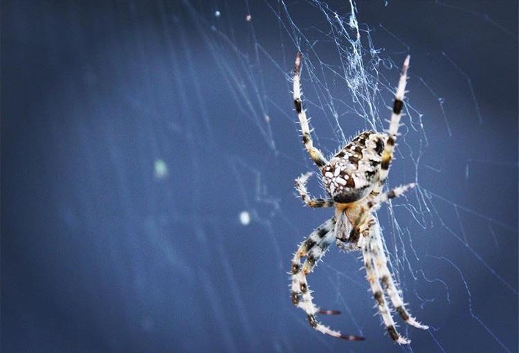 Spinnenweb -