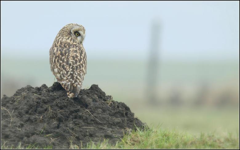 Scherpe blik - Zeker een half uur lag ik met mijn camera in de modder en bagger van een nat weiland, verscholen achter een rand van lang en dor gras w