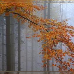 verkleurende bladeren