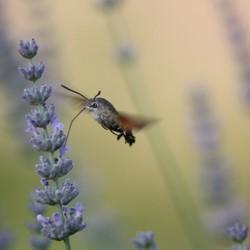 Vliegensvlug avondeten
