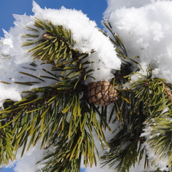 Midden in de winter onder de sneeuw