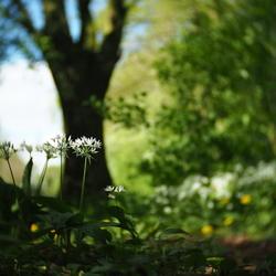Daslook - fotowedstrijd puur natuur inzending 1