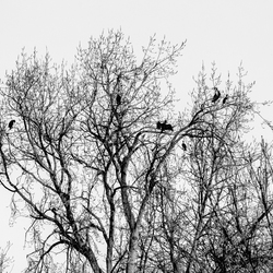 Birds in the love tree