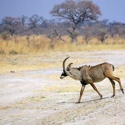Namibië 197