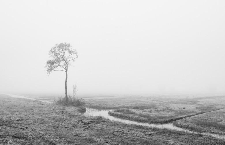 Alleen - Een koud rondje in de vroege ochtend met de honden. Mist vind ik altijd wel iets hebben dus de Nikon gaat ook mee de kleine wereld in. Heerli