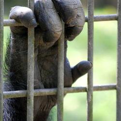 apenhand