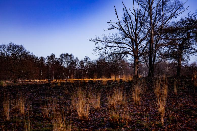 Meinweg - Afgelopen zomer werd dit prachtige natuurgebied zwaar getroffen door een heftige bosbrand.